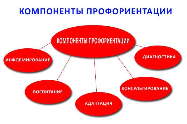 Компоненты профориентации